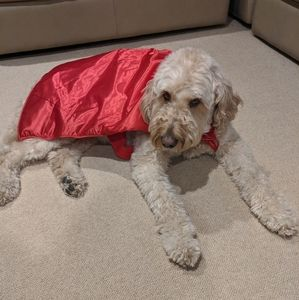 Red Super Hero cape dog costume